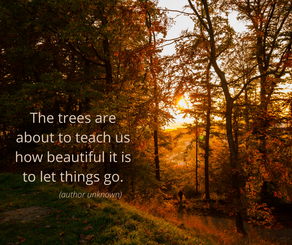 The trees are about to teach us how beautiful it is to let things go (author unknown).